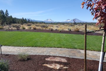 Lawns and Sod